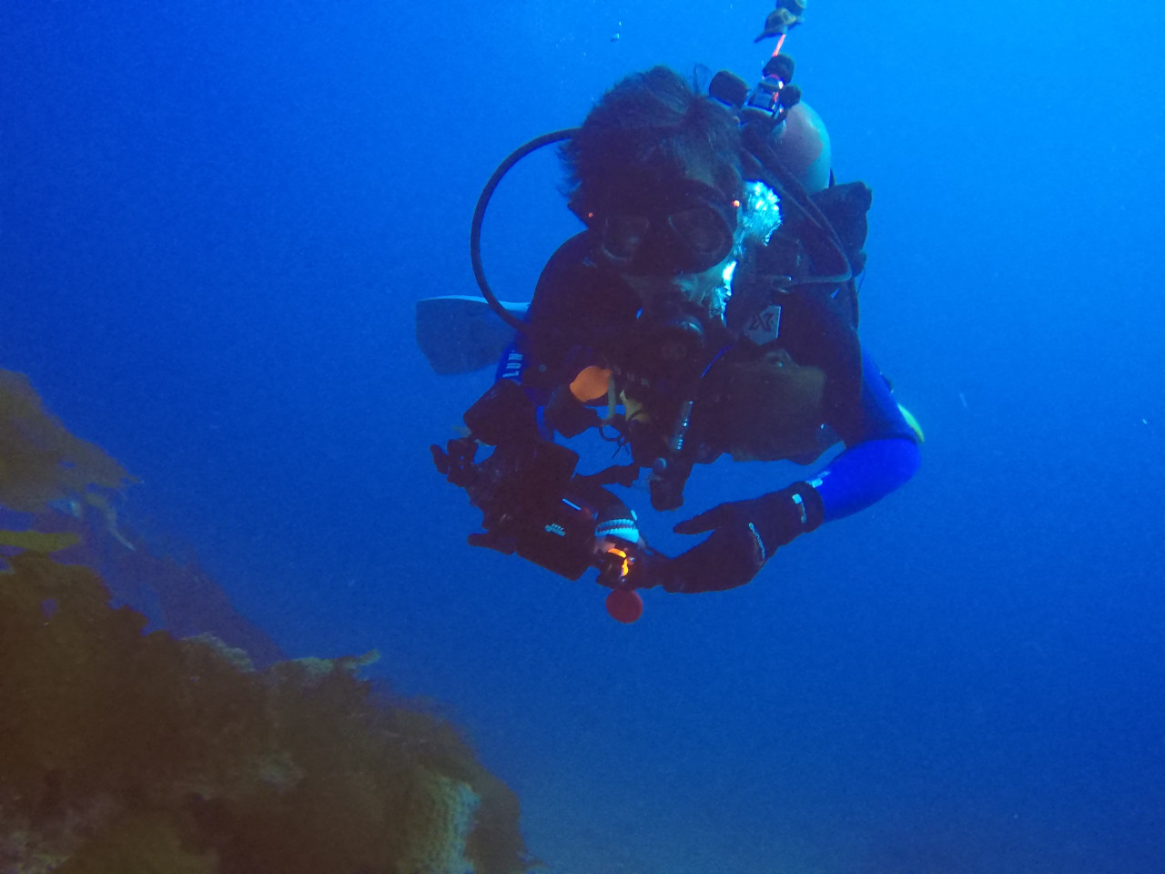 In 2 deep diving in 2 deep catalina 1betcityfo Choice Image
