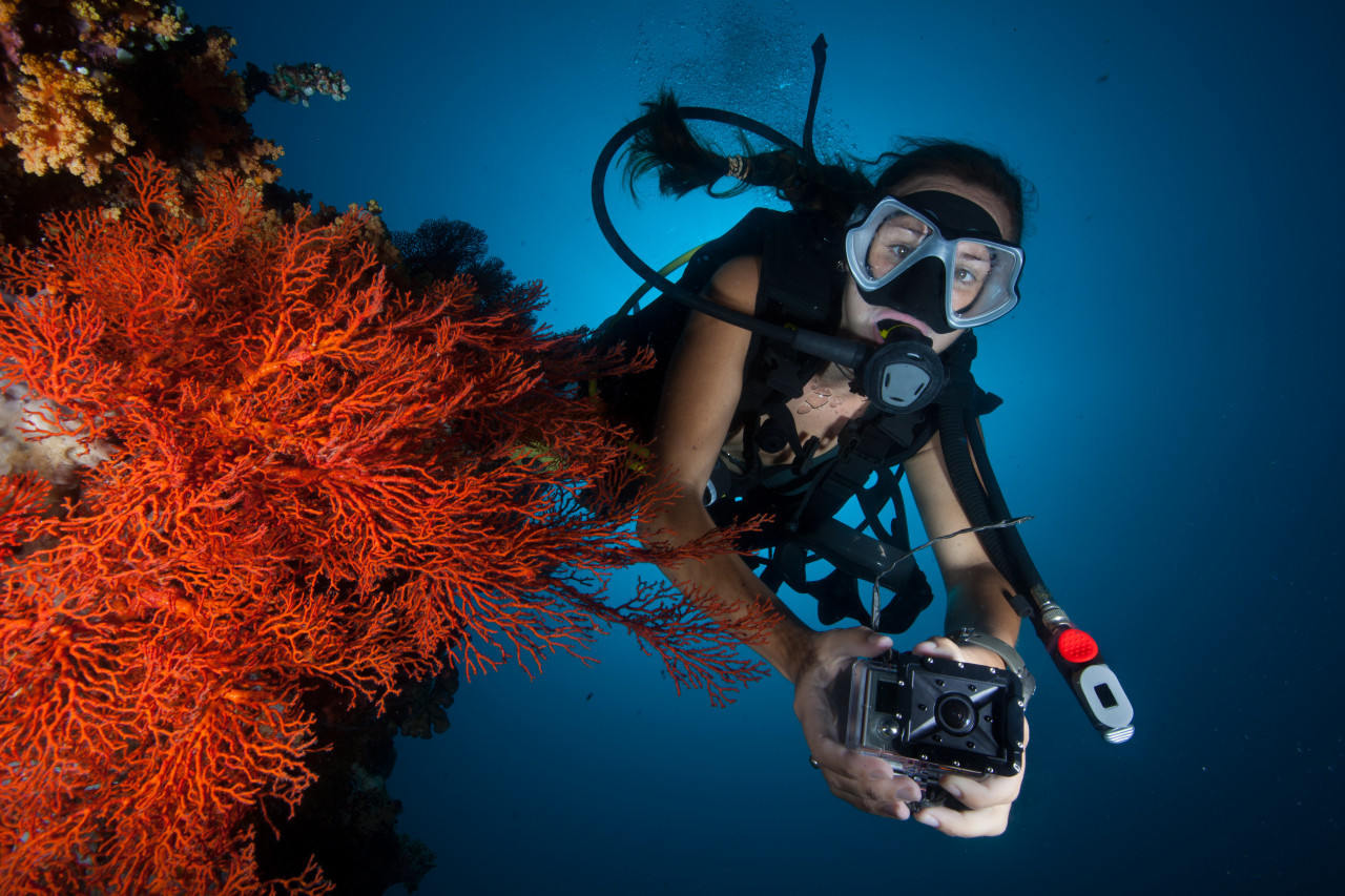 Photo of Digital Underwater Photography (Options for Snorkelers and Skin Divers Available) diving course.